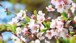 C'est le printemps au caj